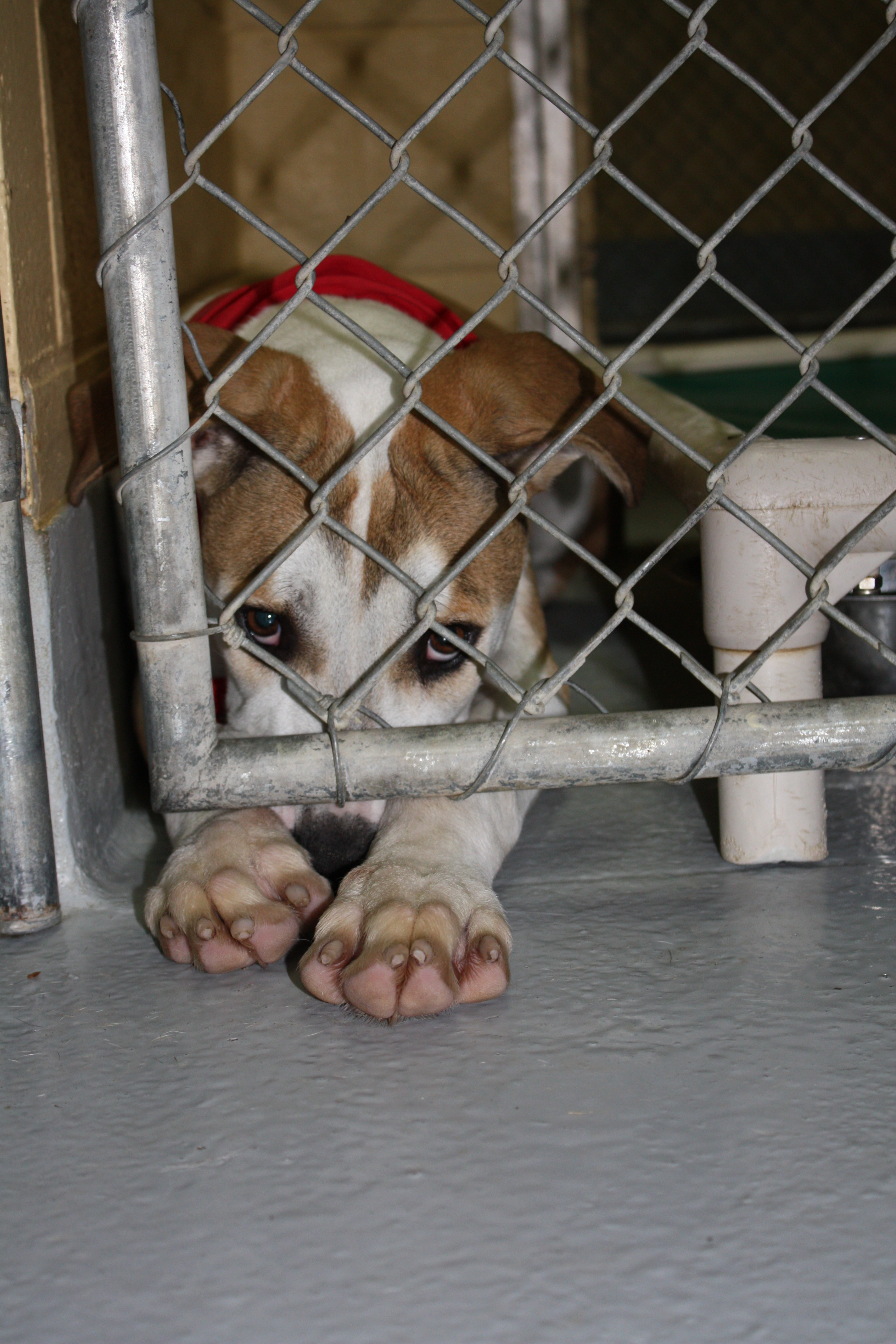 Getting To No More Homeless Pets In Tulsa Oklahoma Animal Alliance